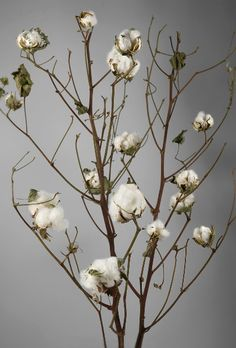 """Such a cute alternative to flowers.  I need some of these.  Natural Cotton Stalks 27"""" Branches $5.99 each / 3 for $5 each"""