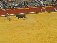 fira del toro castellon 2013
