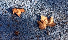 Primeras hojas caídas..