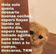 𝘚𝘪𝘵𝘶𝘢𝘤𝘪𝘰𝘯𝘦𝘴 𝘪𝘯𝘷𝘦𝘯𝘵𝘢𝘥𝘢𝘴 𝘤𝘰𝘯 𝘭𝘰𝘴 𝘤𝘩𝘪𝘤𝘰?… #detodo # De Todo # amreading # books # wattpad Cute Cat Memes, Cute Love Memes, Funny Love, Memes Humor, Bts Memes, Funny Memes, Kauai, Current Mood Meme, Pinterest Memes