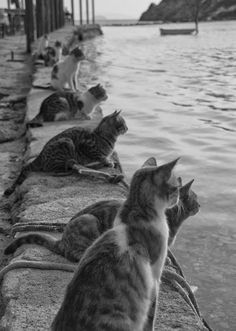 cats waiting for the fishermen to return.