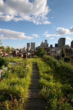 Rooftop garden with an incredible view of New York City--love that you feel like you're in a field of wildflowers. :)