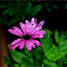 Raindrops (: