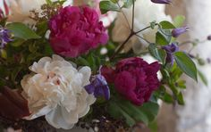 clematis and peonies addition