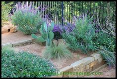 Austin Native Landscaping, Austin, Texas based Professional Landscaping Company and Landscape Contractor offers Landscape Construction, and Xeriscape Design Services in Austin and the surrounding Hill Country area. Sloped Backyard Landscaping, Texas Landscaping, Succulent Landscaping, Landscaping With Rocks, Modern Landscaping, Landscaping Plants, Landscaping Ideas, Backyard Ideas, Drought Resistant Landscaping