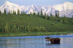 denali national park summer