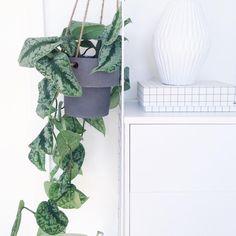 http://www.fermliving.com/webshop/shop.aspx?eComSearch=True&ID=14&eComQuery=Plant+Hanger