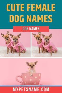 Some of the best cute female dog names can be found within the Latin and Hebrew languages. These languages give words with adorable meanings to show off your dog's brilliant qualities! Check out our list for ideas.  #cutefemaledognames #femaledognames #femalecutedognames Cute Female Dog Names, Cute Pet Names, Languages, Cute Dogs, Your Dog, Meant To Be, The Incredibles, Pets, Check