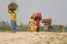 Small farmers in India, many of whom are women, face many challenges including environmental degradation, access to water, and more. The Gates Foundation, and other NGO's, are working to come up with solutions for these challenging problems. (Gates Foundation, flickr)