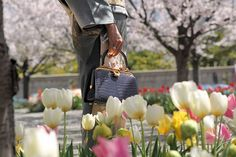 Kwanpen Flowers Japan Spring is very beautiful. A lot of cherry blossoms are blooming! Please try to find a spring style in our boutique. Japan Spring, Signature Collection, Cherry Blossoms, Spring Style, Spring Fashion, Prince, Bloom, Boutique, Flowers