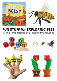 Fun Stuff for Exploring the Importance of Bees with Kids.  Repinned by Apraxiakidslearning