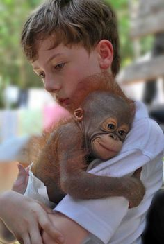 Hold an orangutan
