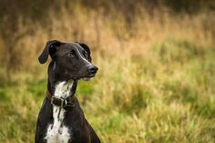 Why Taking Pictures of Your Pets Will Help Make You a Better Photographer