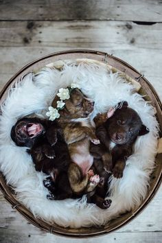 Puppy photography newborn puppies, baby puppies, cute puppies, cute dogs, d Newborn Puppies, Baby Puppies, Dogs And Puppies, Doggies, Newborn Puppy Care, Small Puppies, Puppy Pictures, Dog Photos, Puppy Litter