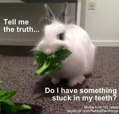 A female rabbit is called a doe. A male rabbit is called a buck. A young rabbit is called a kit (or kitten). Bunny Meme, Funny Bunnies, Cute Bunny, Fun Facts For Kids, Fun Facts About Animals, Kids Fun, Funny Rabbit, Pet Rabbit, Rabbit Toys