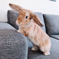 Cute Baby Bunnies, Funny Bunnies, Cute Funny Animals, Cute Baby Animals, Animals And Pets, Amor Animal, Rabbit Hutches, Pet Rabbit, Cute Animal Pictures