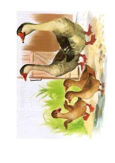 Сельскохозяйственные Животные, Модели Чучел Животных, Монтессори, Изобразительное Искусство Из Дерева, Шаблоны, Животные, Картинки Домашних Животных