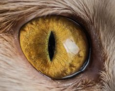 猫の眼球をマクロ撮影した写真シリーズ