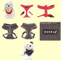 New Modish (Winter) harness from Puppia! Orange Red, Orange Color, Vertical Stripes, 2 Colours, Dog Cat, Things To Come, Medium, Cats, Grey