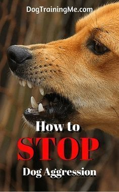 Is your dog showing too much aggression? Learn how to stop dog aggression. Calm your angry dog with these tips that will teach your dog obedience. Use these dog training tips now to stop aggression in your dog! Is your dog showing too much Shares Training Your Puppy, Dog Training Tips, Potty Training, Dog Aggression Training, Agility Training, Training Classes, Puppy Aggression, Dog Agility, Training Schedule