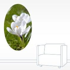 #White #Crocus #Wall #Decal  Blooming white crocus flowers on green grass background, painting effect    $19.19