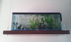 1000 images about gecko craft on pinterest geckos for Bookshelf fish tank