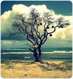 A real life island Easter Tree.  Hauula, Hawaii