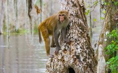Silver Springs Wild Monkeys Attract Tourists - And Controversy