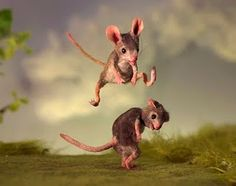 Leapfrog - Mouses Houses