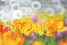 Poppy Light by LilliPhoto-Midori Photography, Facebook