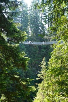 Capilano Suspension Bridge, 140 m (450 ft) long and hanging 70 m (230 ft) above the Capilano River.  The two pre-stressed steel cables supporting the bridge are each capable of supporting 45,000 kgs and together can hold about 1300 people.