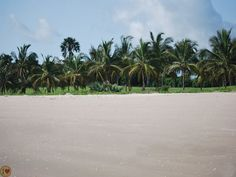 Cap skirring is among the most beautiful beaches in West Africa. It is between forest and ocean with coconut trees around.