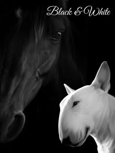 """""""A Horse & Bull Terrier"""" (Digital collage& paint by David Meyer)"""