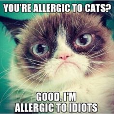 Grumpy is allergic to idiots.