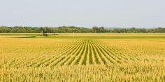 New Generation of GM Crops Puts Agriculture in a 'Crisis Situation'  http://www.wired.com/2014/09/new-gm-crops/