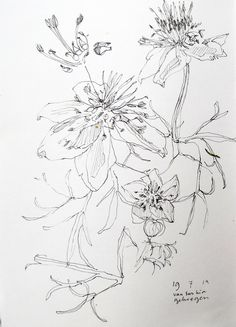 flowers - pendrawing