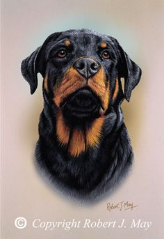 I have a rottweiler dog, named Titan. He was the runt of the pack, so he's an omega, which means he's very goofy, and silly. He loves to play outside, and he's very friendly. We love our little rottweiler <3
