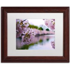 Trademark Fine Art Cherry Blossoms 2014-2 inch Canvas Art by CATeyes, White Matte, Wood Frame, Size: 11 x 14, Brown