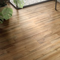 Tavern oak laminate flooringfrom lowes Flooring ideas Pinterest