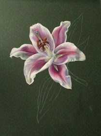 Botanical Sketches and Other Stories: Stargazer Lily in Gouache Lilies Drawing, Stargazer, Hand Embroidery Designs, Gouache, Art Drawings, Sketches, Lily, Flowers, Color
