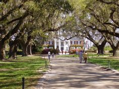 The boone hall plantation house