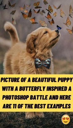 #Picture #Beautiful #Puppy #Butterfly #Inspired #Photoshop #Battle #Best #Examples Diy Resin Projects, Wooden Projects, Photography Pics, Illusion Photography, Long Sleeve Bridal Dresses, Wild Tattoo, Diy Hanging Shelves, Cute Little Puppies, Sunset Wallpaper