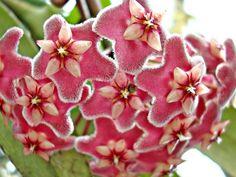 World Most Beautiful flowers