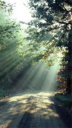 Nature Forest Sunlight Trees Road #iPhone #6 #wallpaper