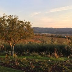 Happy Thanksgiving from our family to yours! Wishing you a wonderful holiday! #thanksgiving #grateful #napavalley #itsfromnapa #napaview #fallinnapavalley #mywinemoment #thankyou #blessings #givingthanks #vineyardview #winecountry #winecountryliving #winecountrylife Sauvignon Blanc, Cabernet Sauvignon, Napa Valley, Happy Thanksgiving, Wine Country, Blessings, Wild Flowers, Grateful, Vineyard