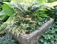 Make a Homegrown Stone Pot : Steps:  Mix together equal amounts of coarse perlite, peat moss that's been sifted and light Portland cement. Add a handful of fiber mesh.  Combine ingredients with water to the consistency of thick oatmeal.