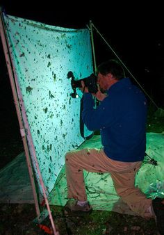 Entomologist photographing insects