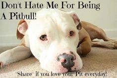 Love. Pin again if you love your pitbull