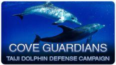 Cove Guardians