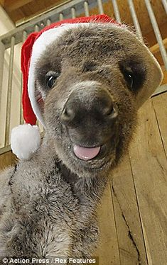 Christmas present: Nikolaus was determined not to miss out on the festive fun by being born premature